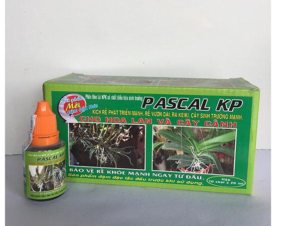 Ra Rễ Phong Lan - Pascal KP